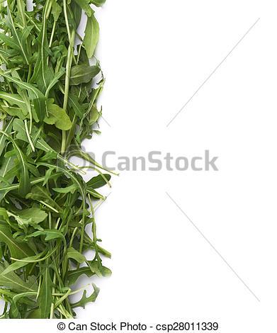 Stock Photos of Eruca sativa rucola rocket salad.