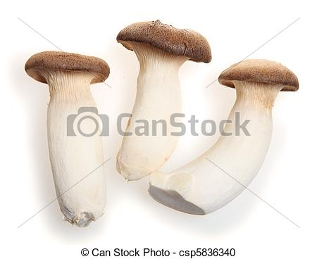 Stock Photography of King oyster mushroom.
