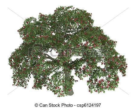 Clip Art of Coral tree or Erythrina.