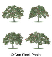 Erythrina Illustrations and Clipart. 5 Erythrina royalty free.