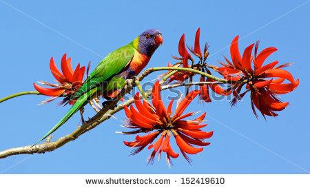 Australia Flower Stock Photos, Royalty.