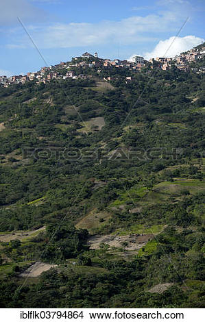 "Stock Photo of ""Illegal Coca fields, Coca bushes (Erythroxylum."
