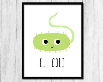 E coli.