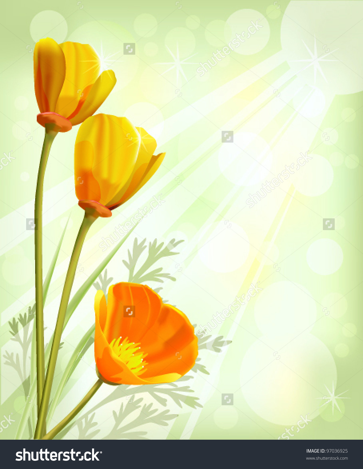 California Poppy Eschscholzia Californica Stock Vector 97036925.