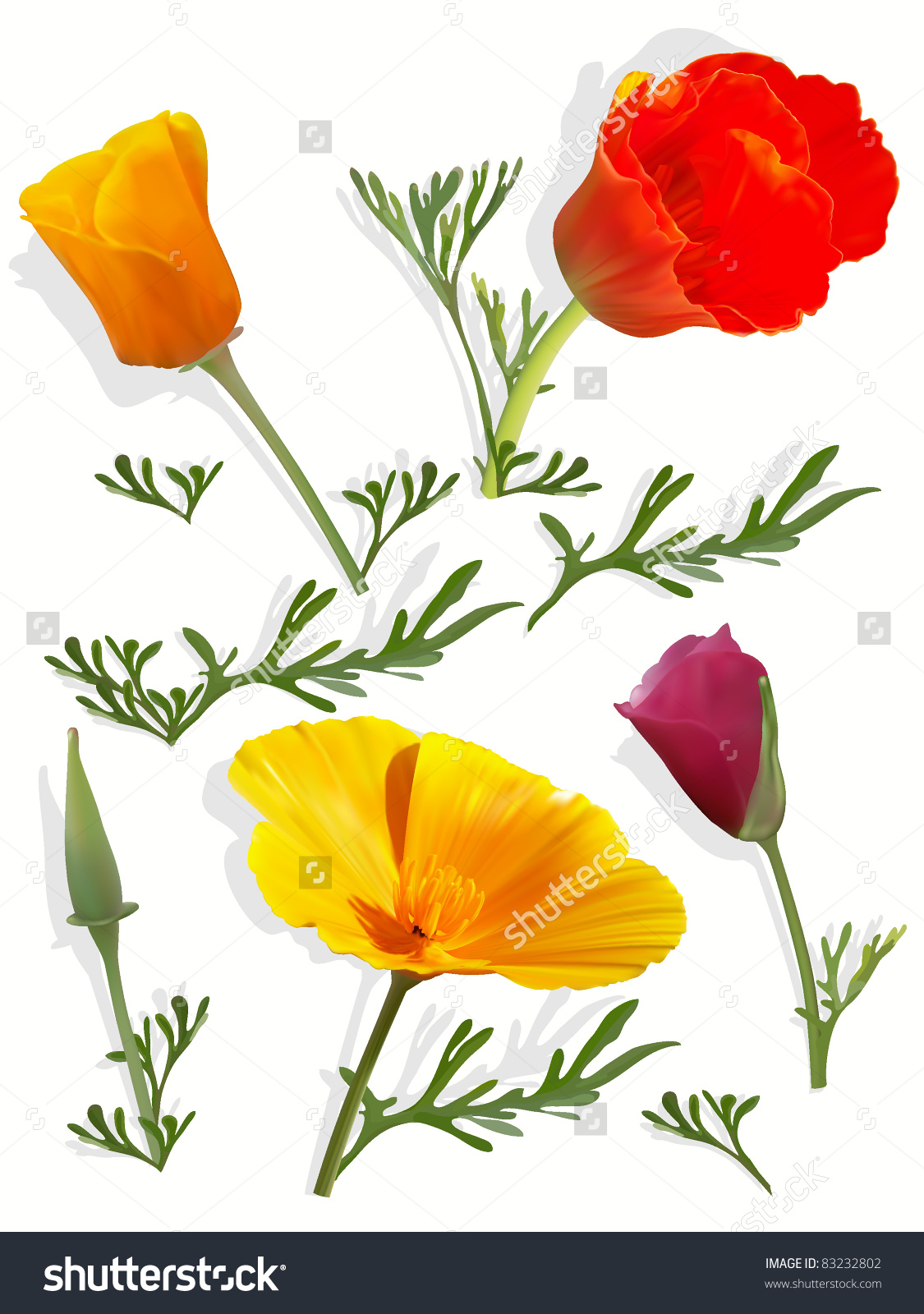 Set California Poppy Flowers Stock Vector 83232802.