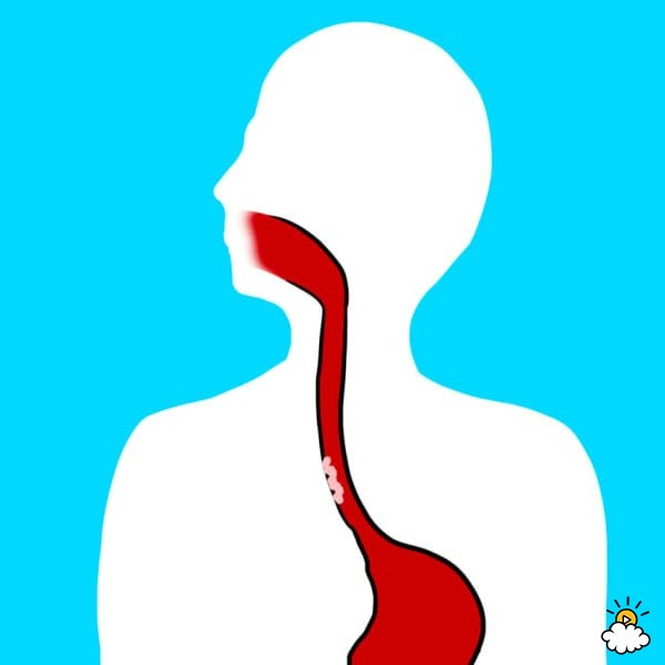 Esophagus Clipart (99+ images in Collection) Page 1.