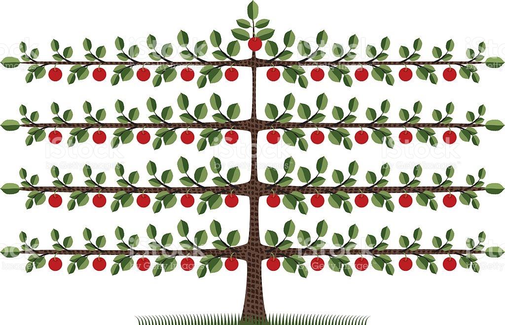 Espalier Apple Tree stock vector art 115036858.