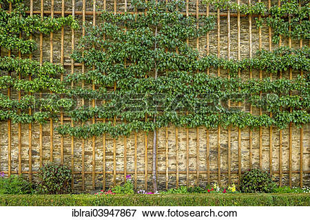 "Picture of ""Fruit trellises with historical pears, espalier fruit."