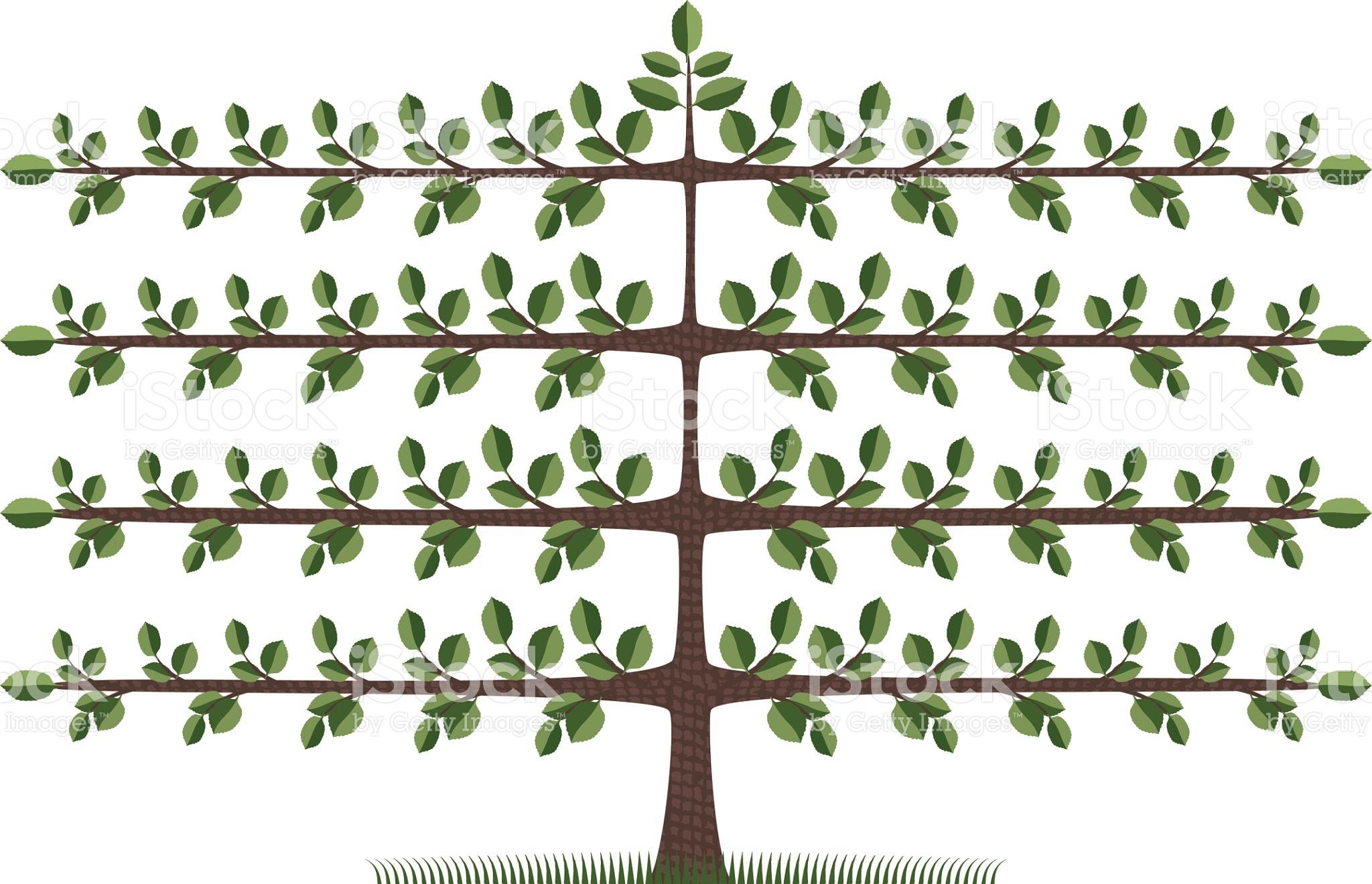 Espalier Tree stock vector art 115036855.