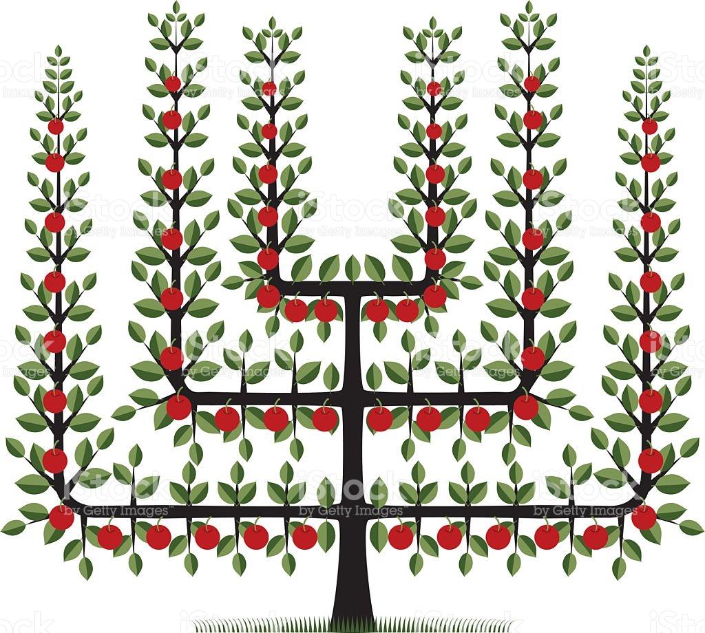 Espalier Fruit Tree stock vector art 115036868.