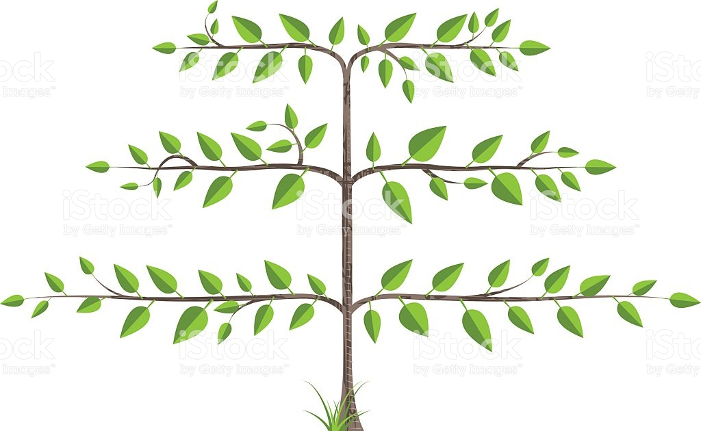 Espalier Tree stock vector art 115036887.