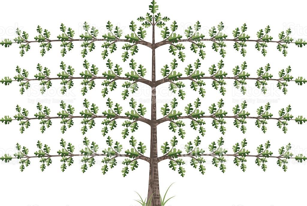 Espalier Tree stock vector art 115036890.