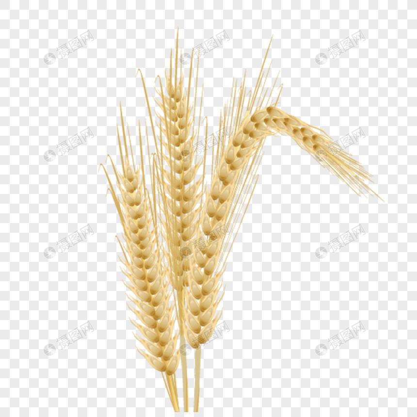 hermosa cosecha de espigas de trigo Imagen Descargar_ Gráficos.