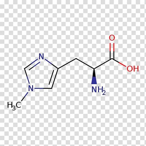 Histidine Essential amino acid Isoleucine Proteinogenic.
