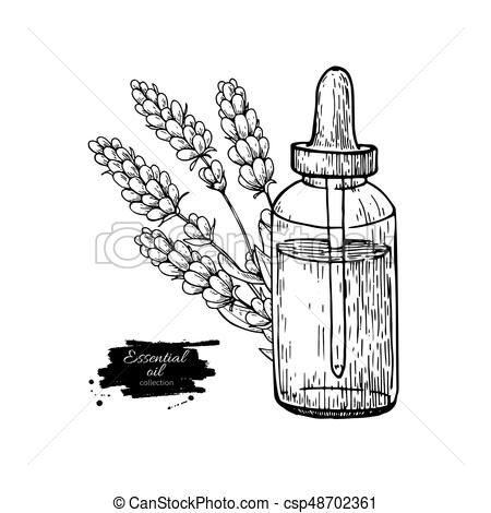 Lavander essential oil bottle and bunch of flowers hand drawn vector  illustration. Isolated drawing for Aromatherapy treatment,.