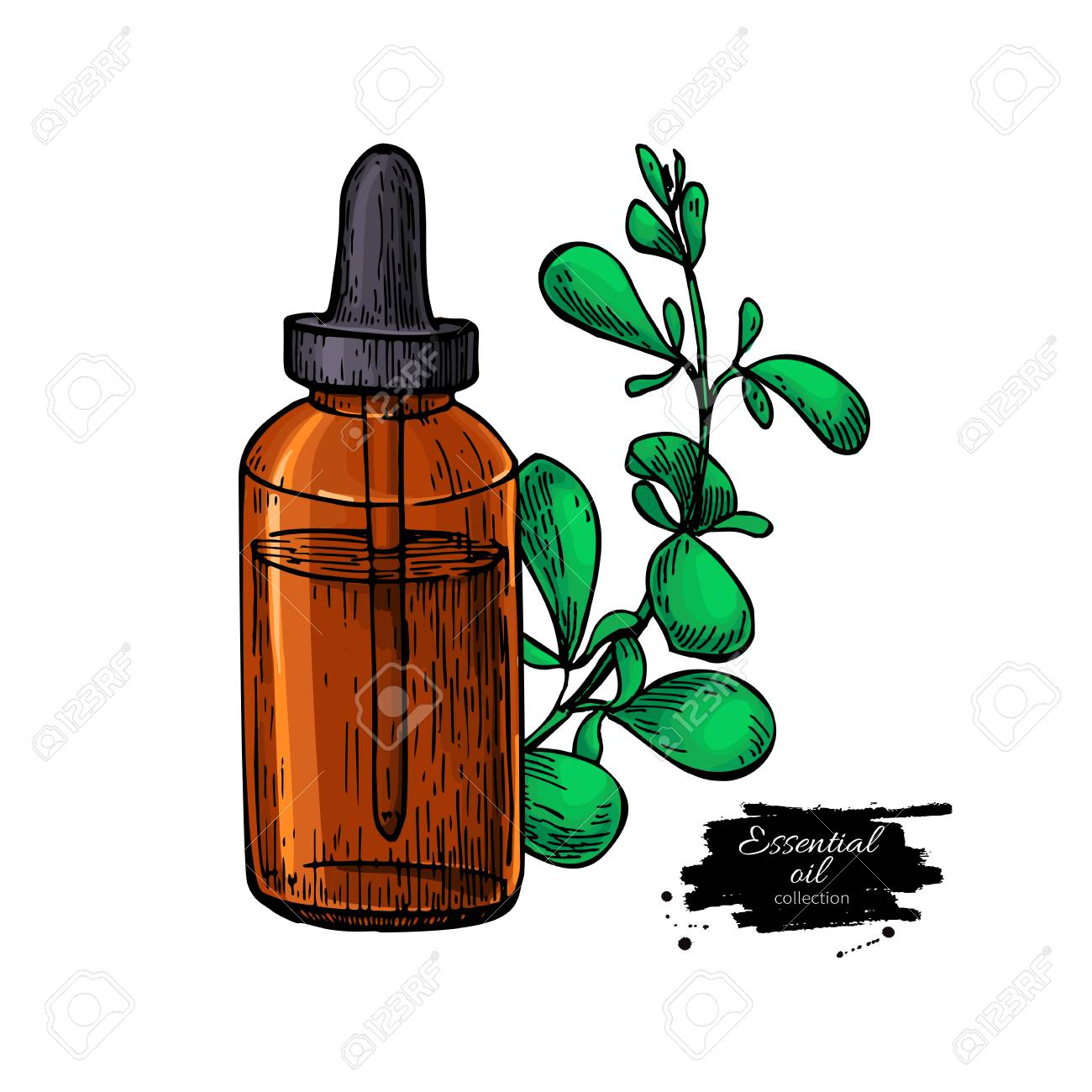 Marjoram essential oil bottle and marjoram leaves hand drawn...