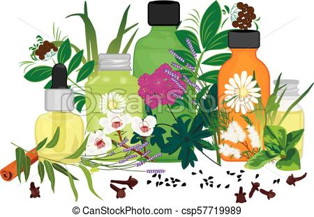 Set of essential oils vector illustration Aromatherapy.
