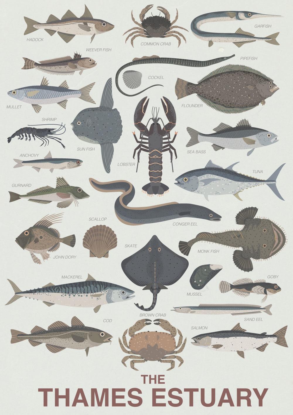 Thames Estuary Fish.