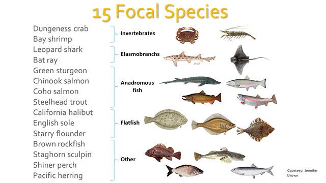 PMEP Pacific Marine and Estuarine Fish Habitat Partnership.