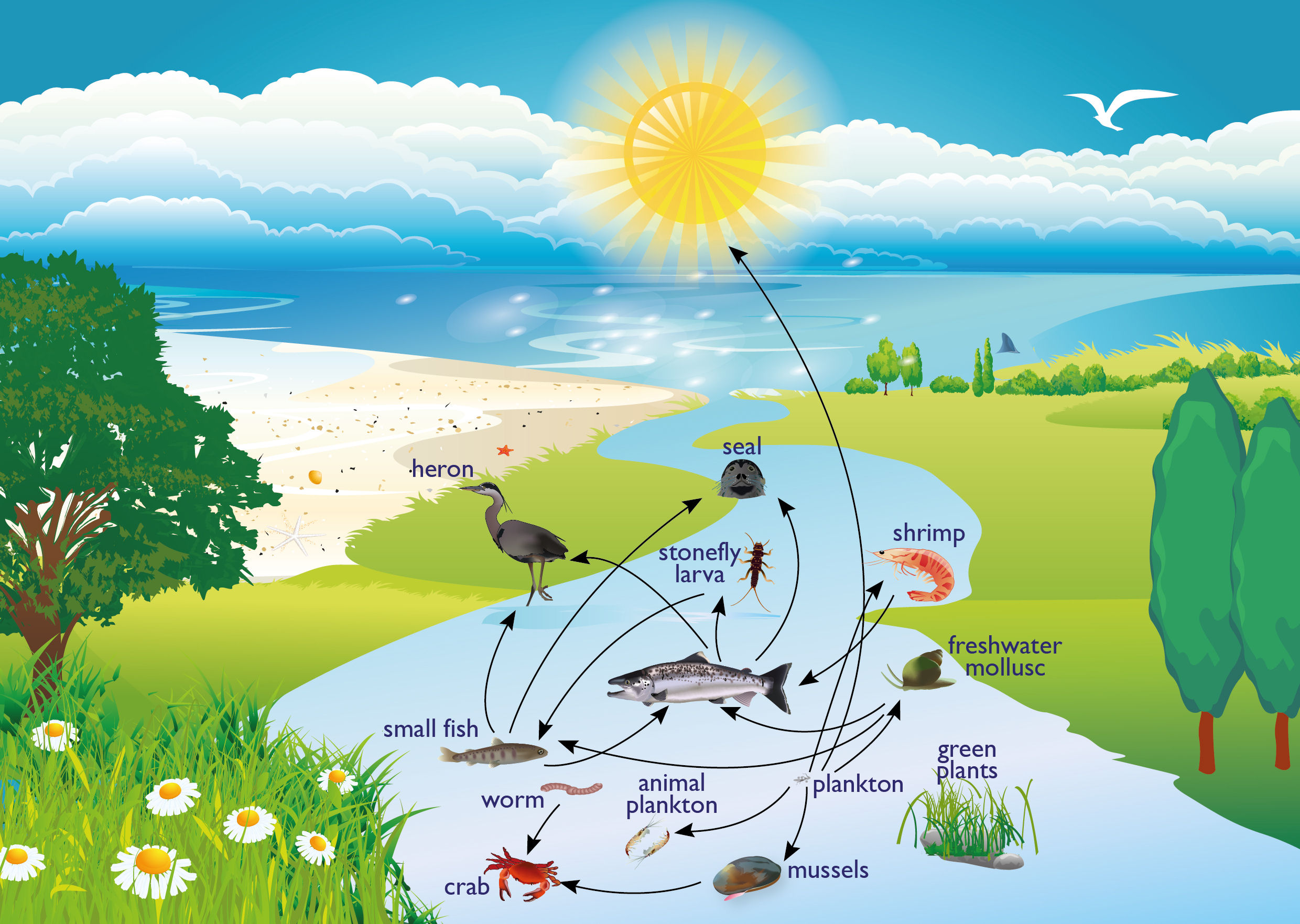 Food web pictures diagram clipart.