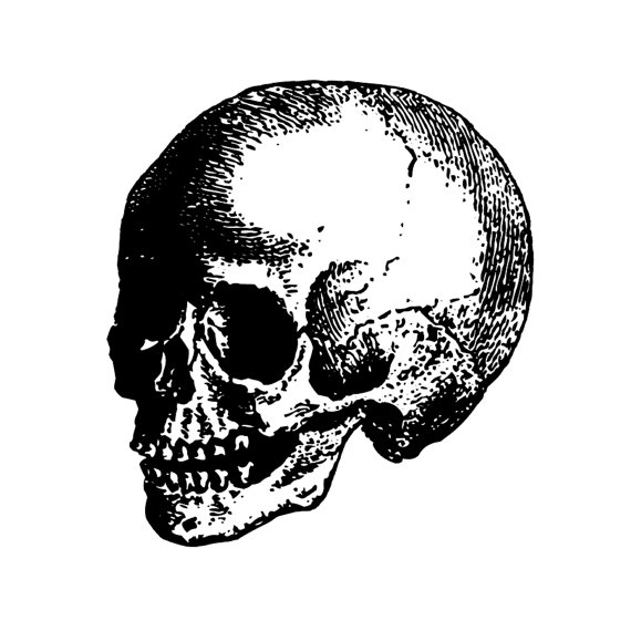 Vintage Child Skull Etching / Engraving by ViciousDelights.
