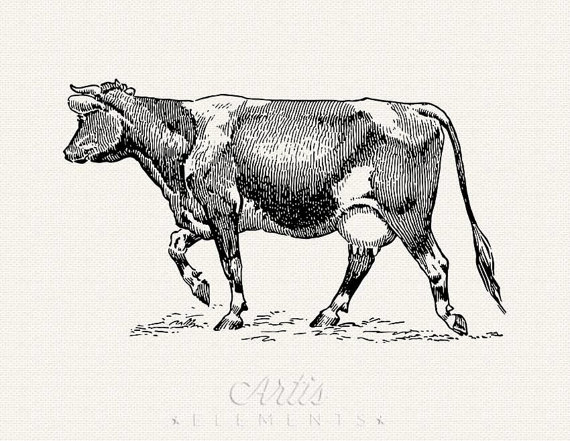 Holstein Female Cow Clipart.