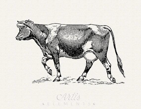 Holstein Female Cow Clipart.