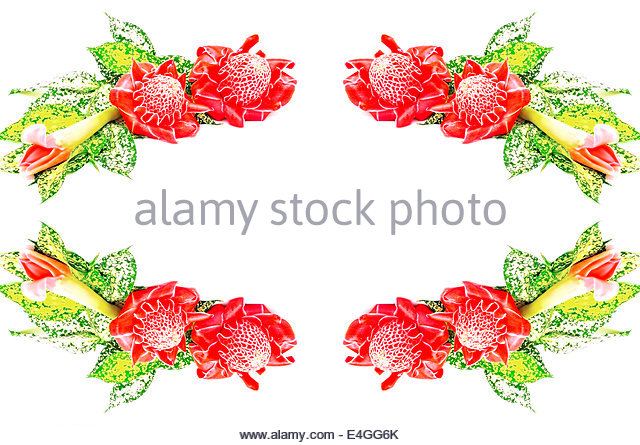 Red Torch Ginger Flower Stock Photos & Red Torch Ginger Flower.