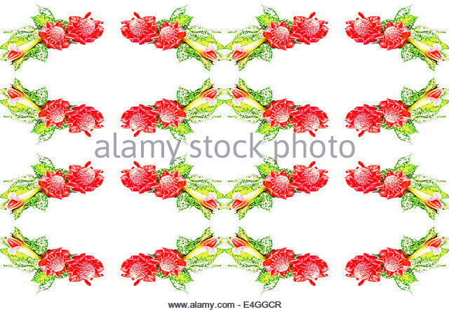 Red Torch Ginger Stock Photos & Red Torch Ginger Stock Images.