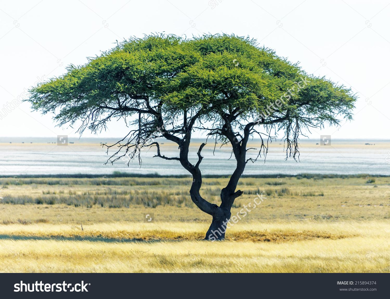 Lonely Tree In Etosha National Park.