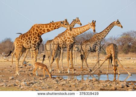 Etosha National Park Stock Photos, Royalty.