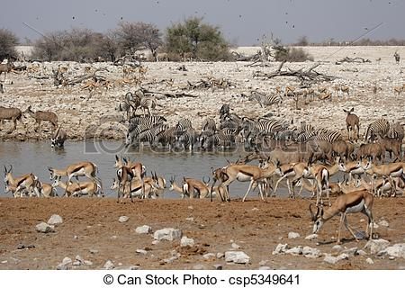 Stock Photography of Animals drinking at the waterhole of.