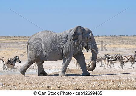 Stock Illustration of Elephant, Etosha National park, Namibia.