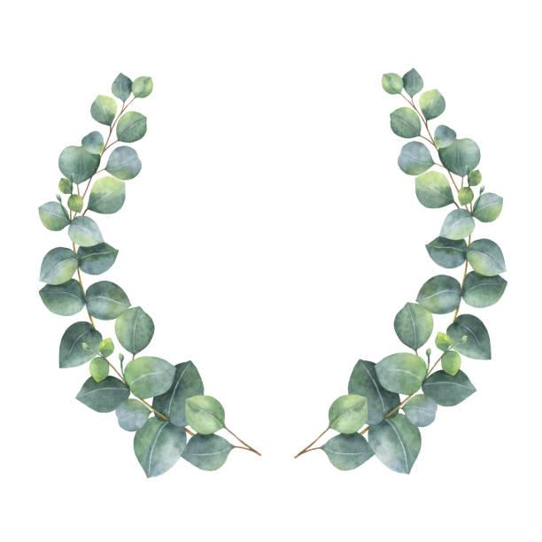 Eucalyptus Leaf Clipart.