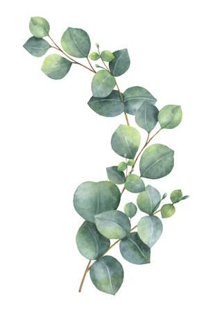 2,431 Eucalyptus Tree Stock Vector Illustration And Royalty Free.