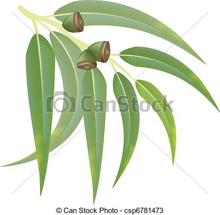 Eucalyptus Illustrations and Clip Art. 542 Eucalyptus royalty free.