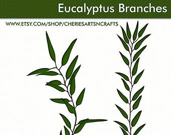 Eucalyptus clipart #12