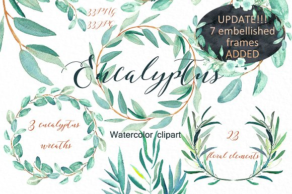 Eucalyptus. Watercolor clipart. ~ Illustrations on Creative Market.