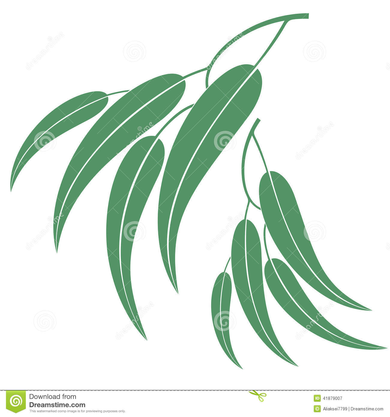 Eucalyptus Stock Illustrations.