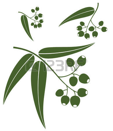 806 Eucalyptus Leaves Cliparts, Stock Vector And Royalty Free.