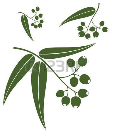 Eucalyptus clipart #3