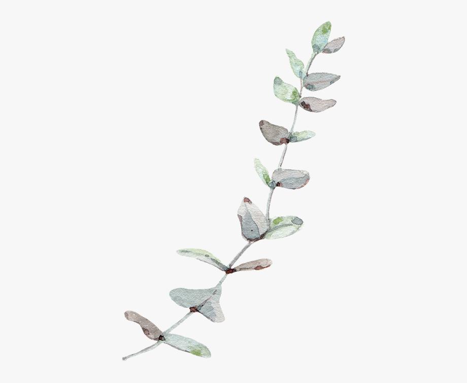 Eucalyptus Leaf Leaves Trees Gum Wind Nordic.