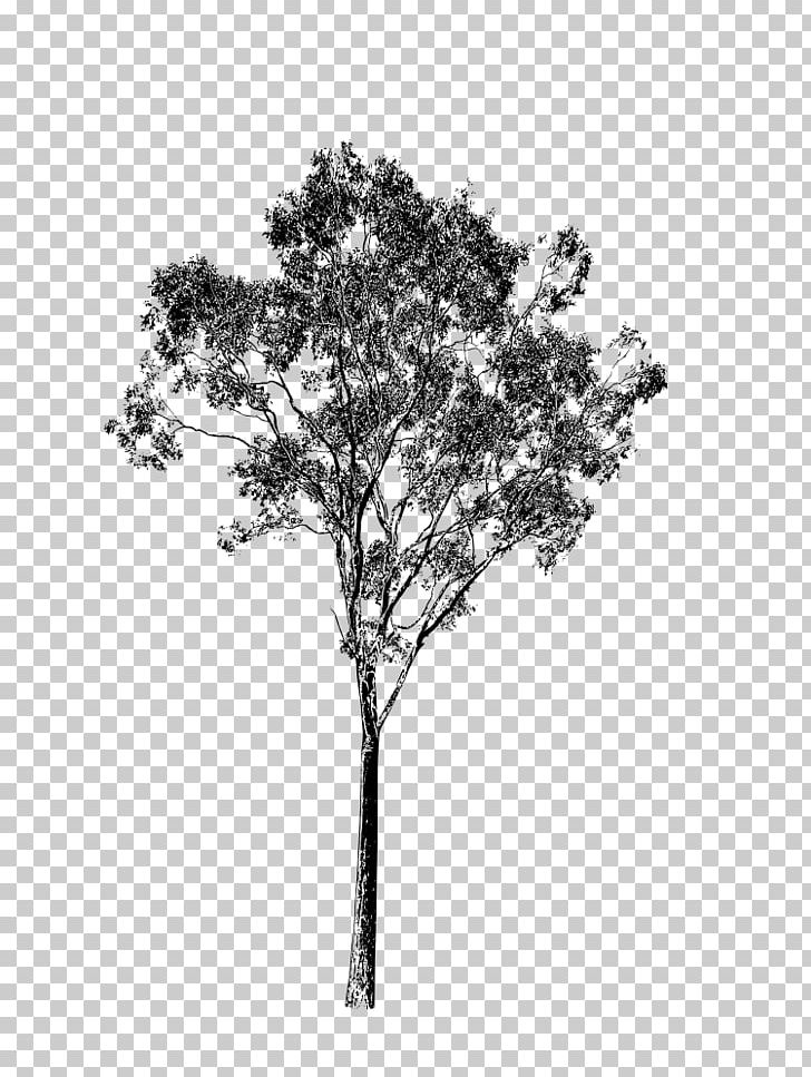 Twig PNG, Clipart, Black And White, Branch, Drawing.