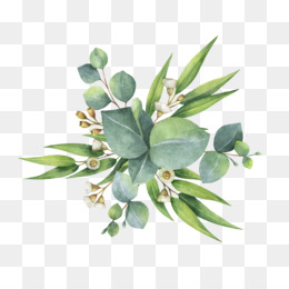 Eucalyptus Leaf PNG and Eucalyptus Leaf Transparent Clipart.
