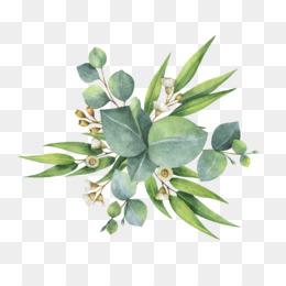 Eucalyptus Leaf PNG and Eucalyptus Leaf Transparent Clipart.