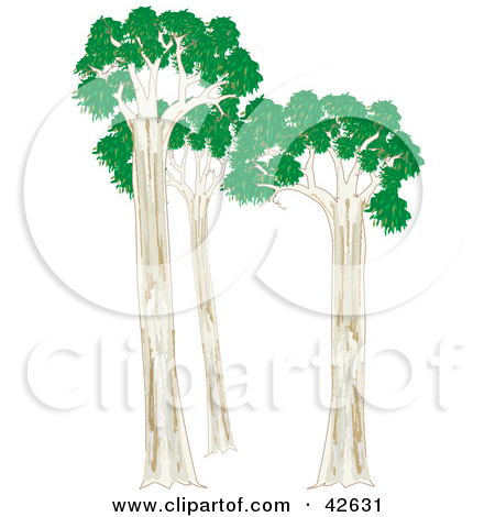 Clipart Illustration of Three Eucalyptus Trees by Dennis Holmes.