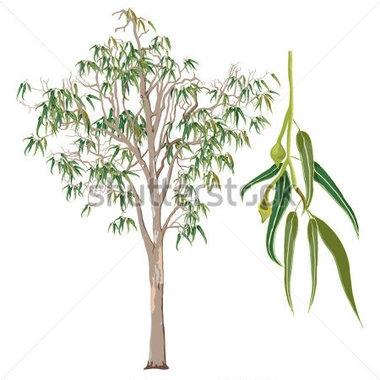 Eucalyptus Forest Clipart Clipground
