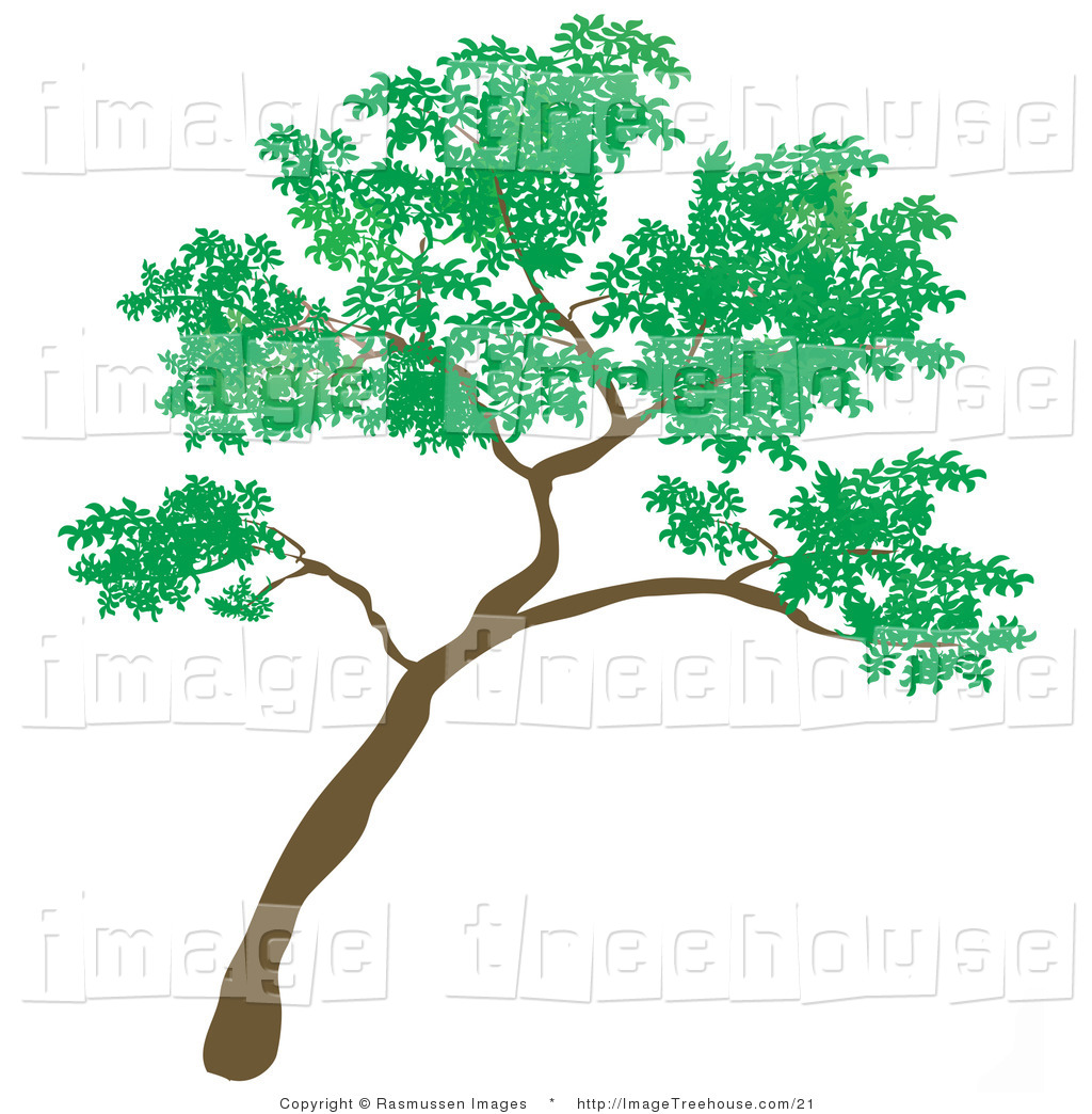 Free clip art of trees.