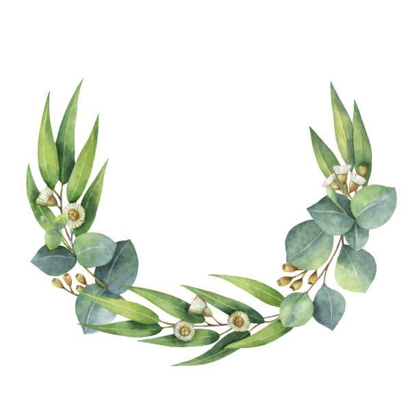 Image result for eucalyptus wreath clip art.