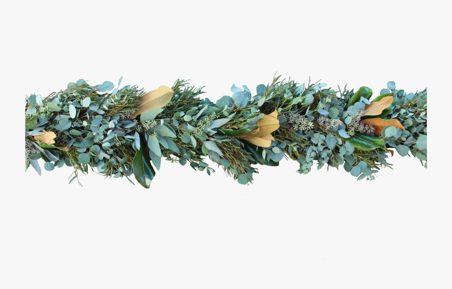 Eucalyptus Garland Png , Free Transparent Clipart.